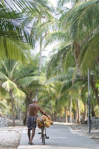 coconuts_man.JPG