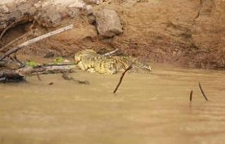 crocodile2.JPG