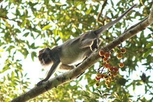 macaque1.JPG