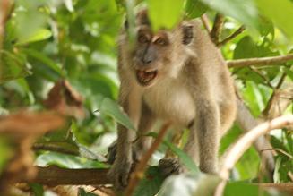 macaque3.JPG