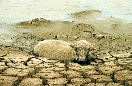 stranded_sheep.jpg
